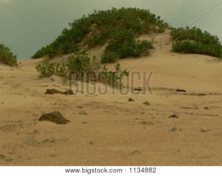 Sandscaping Of A Beach