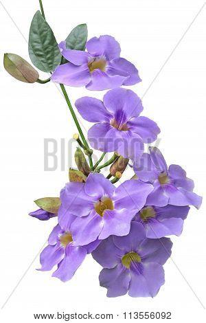 Blue Trumpet Vine Flower