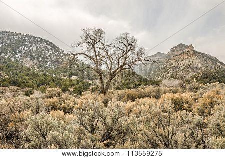 Beautiful Bare Tree