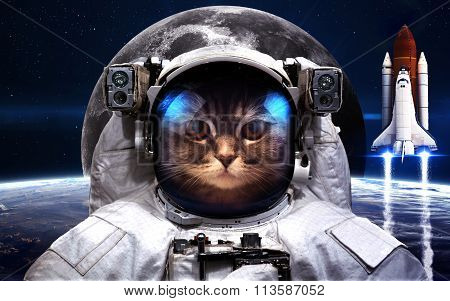 Cat Astronaut in outer space. Spacewalk. Elements of this image furnished by NASA