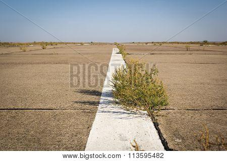 Desert road with white stripe