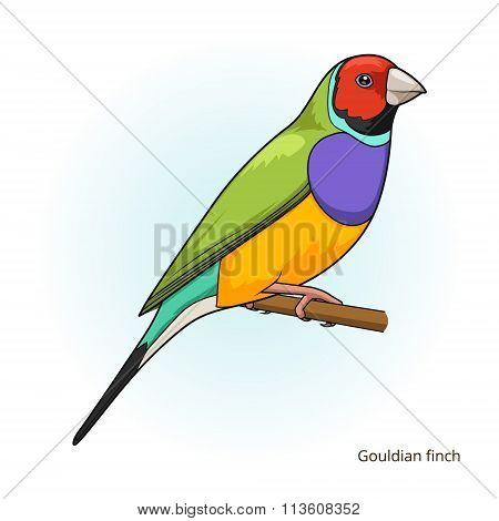 Gouldian finch bird educational game vector