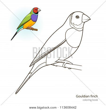 Gouldian finch bird coloring book vector