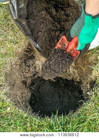 Closeup of gardener's hand filling the hole dug in the ground with garden soil as one of the planting stage