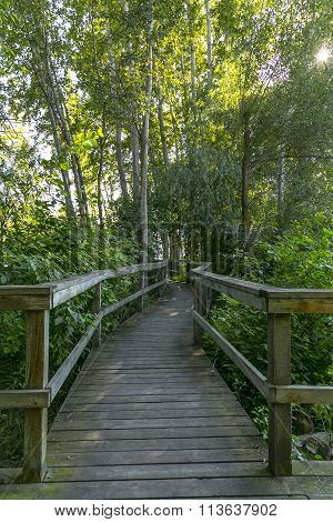 wooden boardwalk pathway in the forest of green foliage and trees