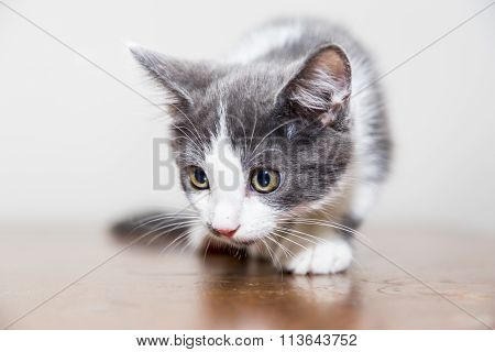 little cat kitten with shallow focus view