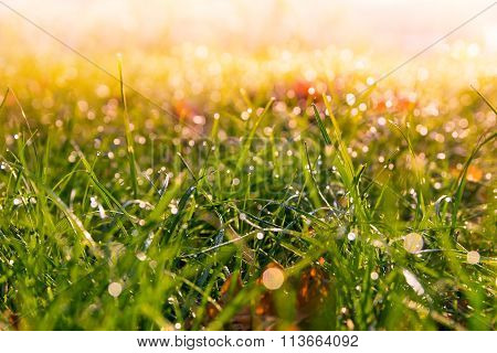 bokehed grass 2