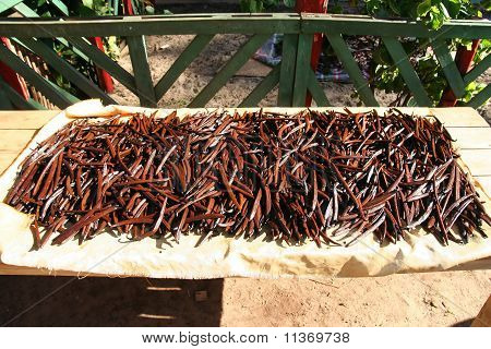 Drying vanilla