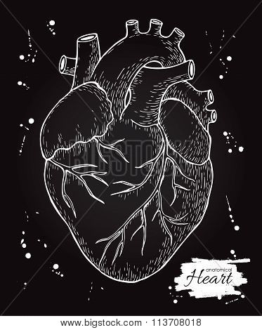 Anatomical Human Heart. Engraved Detailed Illustration. Hand Dra