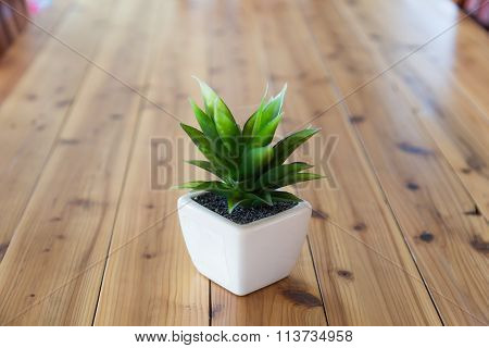 Tree Wearing White Pot
