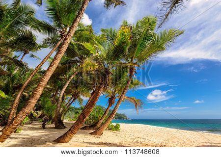 Tropical beach at Seychelles in Mahe Island