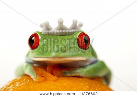 Orange frog