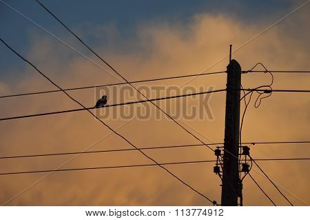 bird on electric wire on sunset