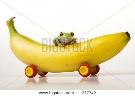 Frog on banana-car