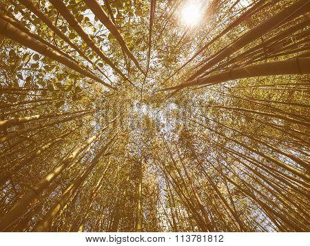 Retro Looking Bamboo Tree