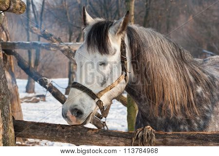 Cute horse having sleep in winter open stall