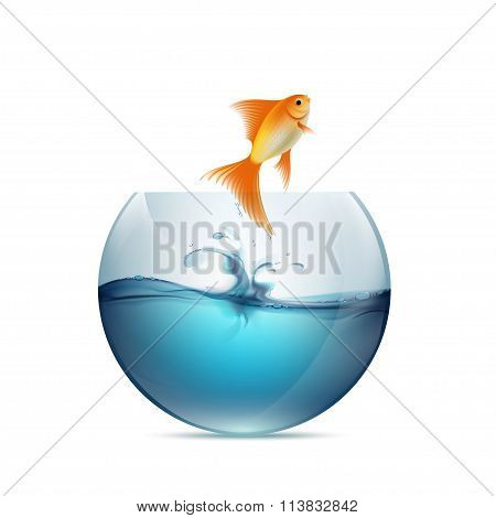 Goldfish Jumping From The Aquarium.