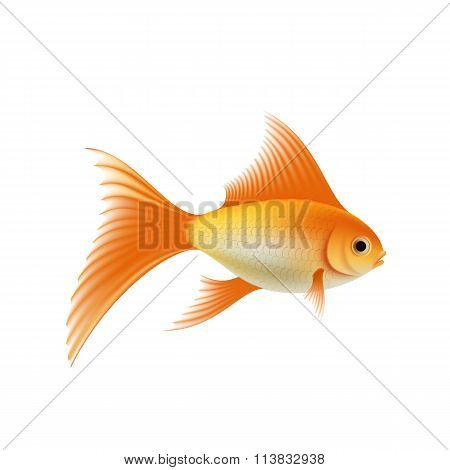 Gold Aquarium Fish