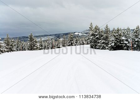 Yellowstone Winter Snow
