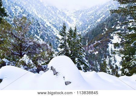 Mountain forest blanketed with snow taken in Mt Baldy, CA
