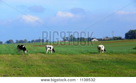 cows in meadow cloudly sky rural scenic bovini poster