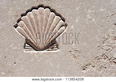 Marble background with engraved scallop seashell symbol of pilgrimage Santiago de Compostela poster