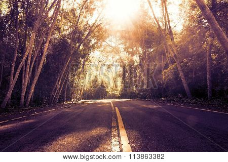 Landscape Shot. Desolate Road In The Forest With Sun Rays Illumining.