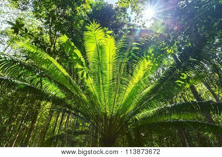 Cycads tree forest soon welcome sunshine