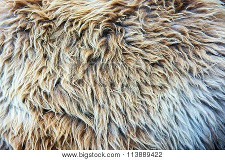 Fur Texture Full Frame Closeup