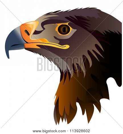 Vector abstract illustration of eagle head isolated on white background