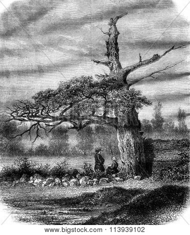 The Oak of Henri IV, near Rennes, vintage engraved illustration. Magasin Pittoresque 1878.