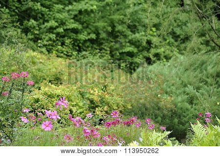 Green Background  With Flowers In The Foreground.