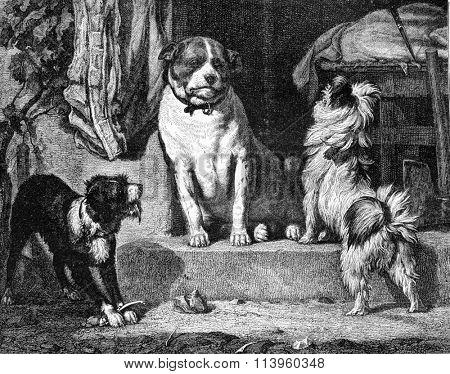 The neighbor of the annuitant V Arnoldt, vintage engraved illustration. Magasin Pittoresque 1870.