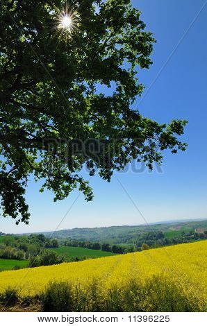 Country view in spring