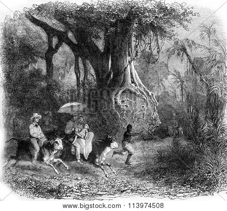 A landscape near Baracoa, in the island of Cuba, vintage engraved illustration. Magasin Pittoresque 1857.