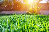 Beautiful view on cute backyard in sunny day, fresh green grass lawn in sunlight, landscaping in the garden, beauty of summer season poster