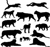 set of big cats silhouettes - vector illustration poster