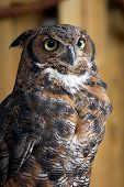 This is an image of an owl. poster