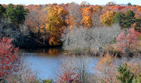 Fall Leaves by the River