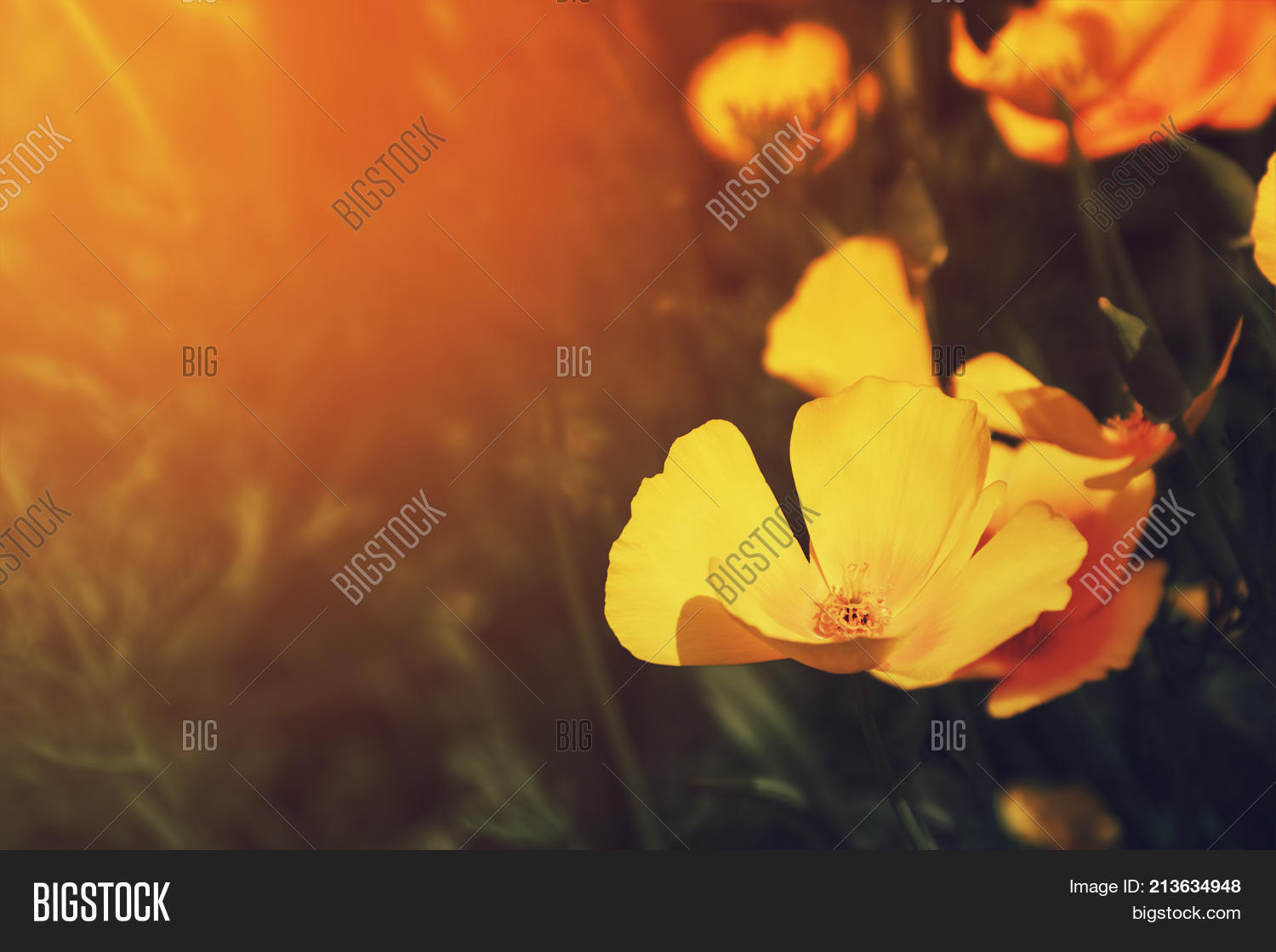 Orange Californian Image Photo Free Trial Bigstock