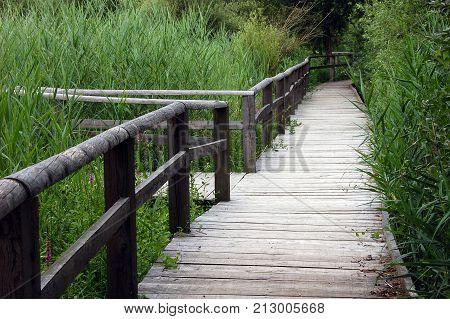 Wooden Pontoon or bridge in reeds bed Poisy marshland Savoy France