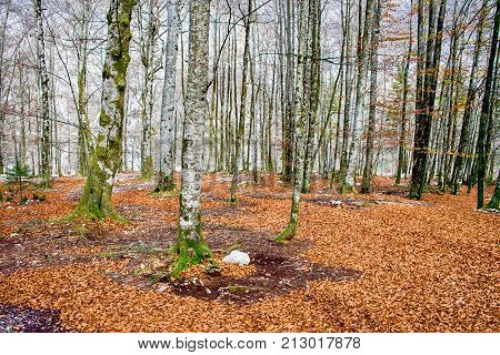 Colorful Autumn Leaves And Tress Covered In Moss
