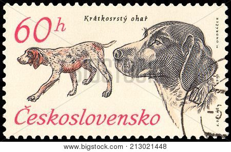 CZECHOSLOVAKIA - CIRCA 1973: a stamp, printed in Czechoslovakia, shows a German Shorthaired beagle, series of hounds