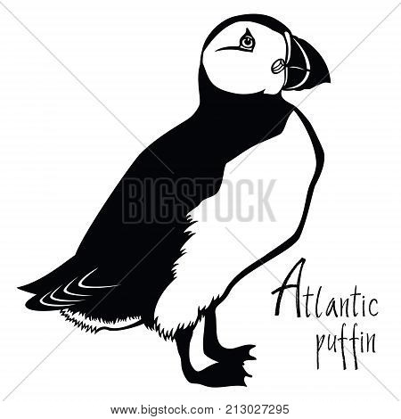 Birds collection Atlantic puffin Black and white Vector object