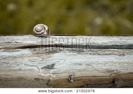 Detail of a Brown Snail on Wooden Fence poster