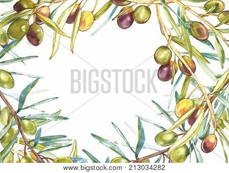 Horizontal banners with ripe black and green olives on white background. Design for olive oil, olive packaging, natural cosmetics, health care products. With place for text