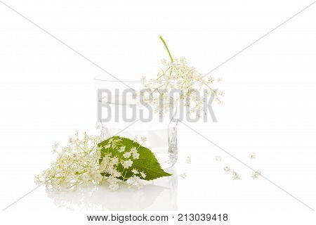Kvass from elderberry flowers in a glass isolated on white background. Culinary elderberry lemonade isolated.