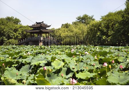 HANGZHOU, CHINA - JULY 30, 2012 - Lotus pond and bridge, West Lake, Hangzhou