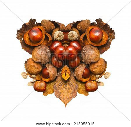 Horse-chestnuts in stylized shape of heart isolated in white background. Aesculus hippocastanum fruits.
