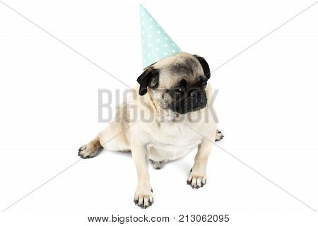 A small pug in a funny cone festive hat sits apart his paws and looks with inertes to the side. Isolated on white background.